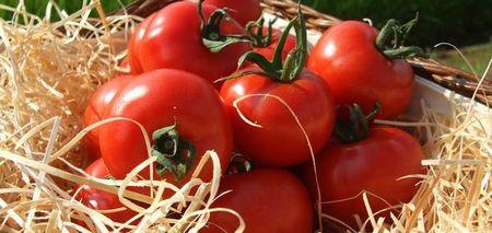 華小町というトマトの味や形の特徴は?