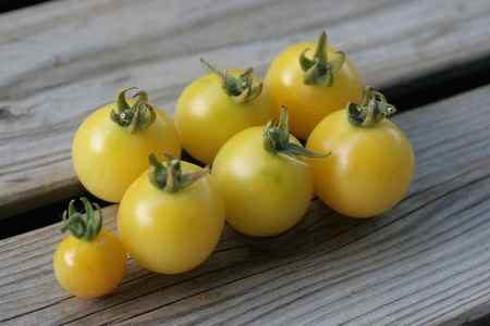 白いミニトマト?チェリースノーボールの味の特徴は?